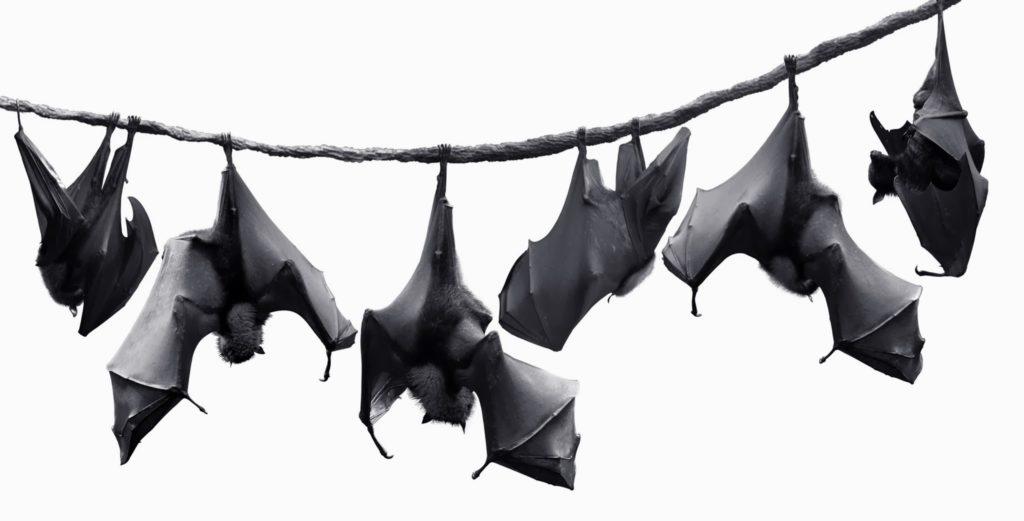 Bat Society
